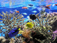 How to breed saltwater fish