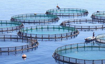 fish farming in pools