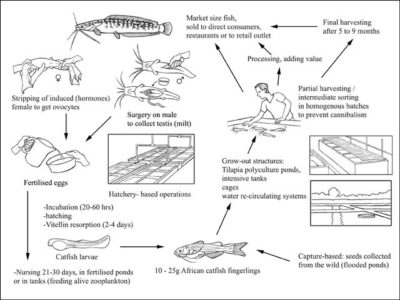 fish reproduction process